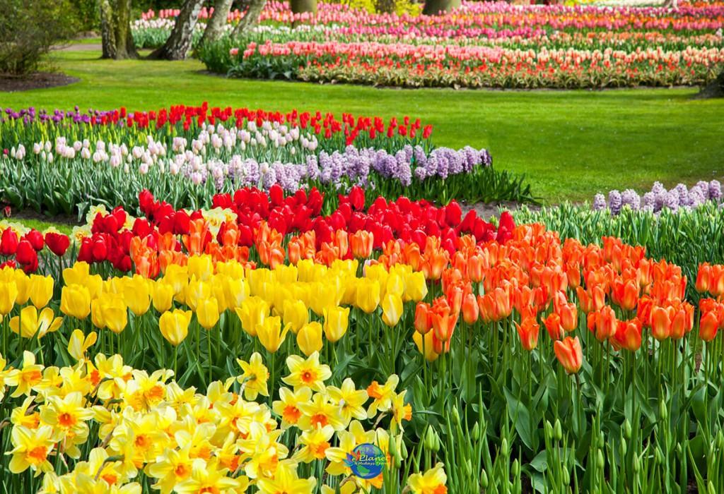 เทศกาลดอกทิวลิป 2