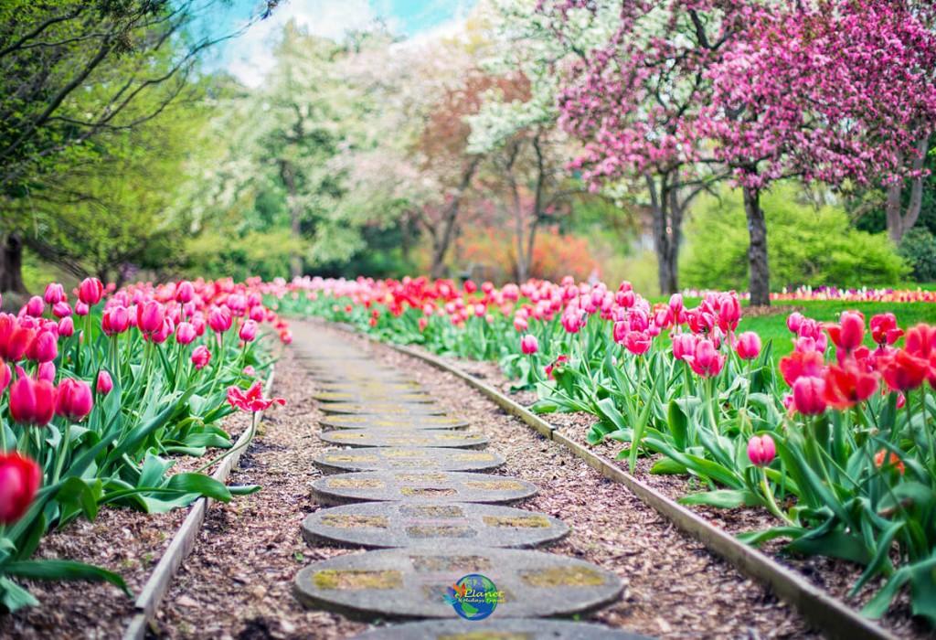 เทศกาลดอกทิวลิป 5