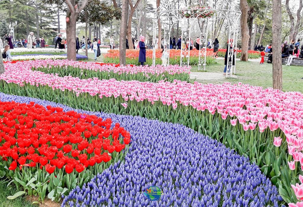 เทศกาลดอกทิวลิป 7