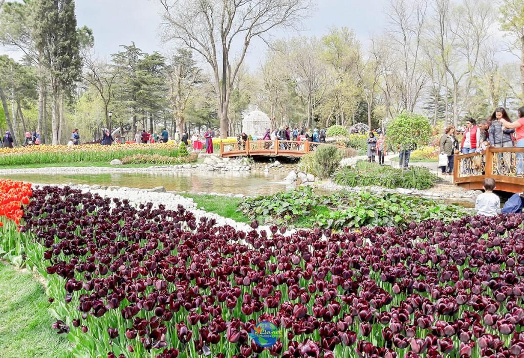 เทศกาลดอกทิวลิป 8