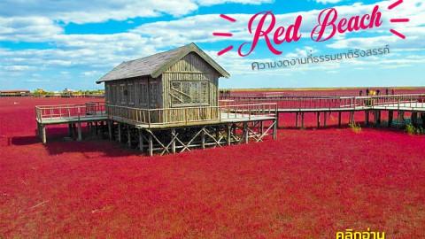หาดทรายสีแดง Red Beach คลิกอ่าน